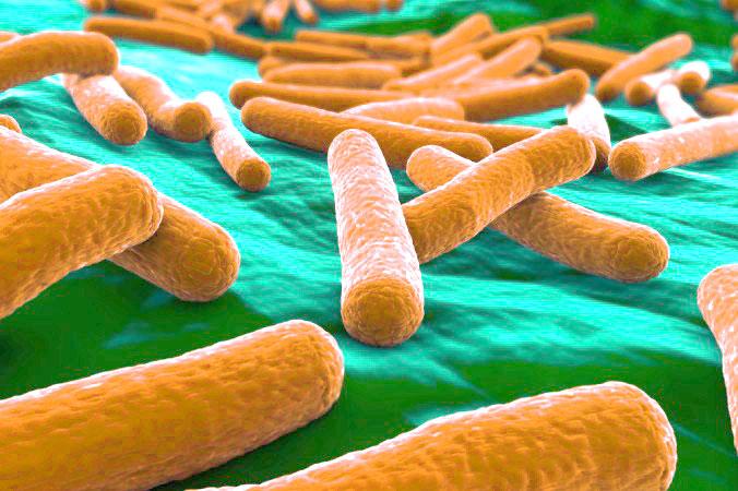 пробиотики что это такое