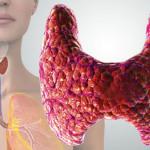 Щитовидная железа. Гормоны