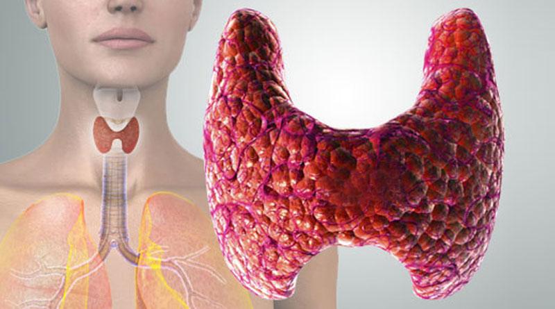 Щитовидная железа Гормоны