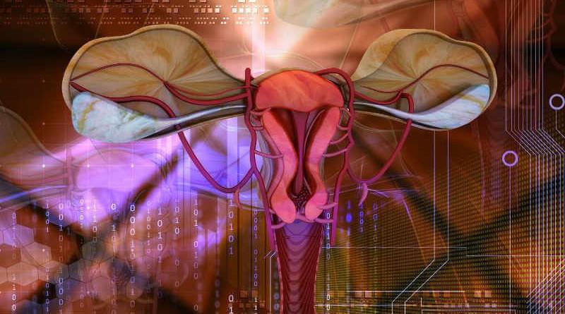 Фертильность у женщин что это