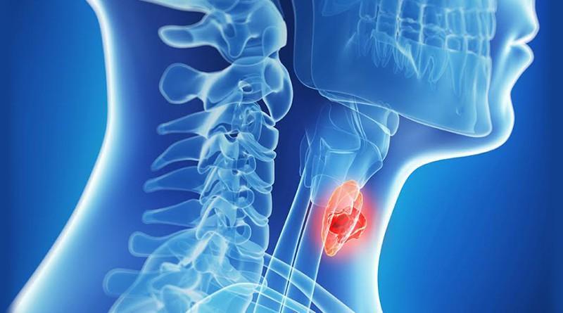 Какие гормоны вырабатывает щитовидная железа