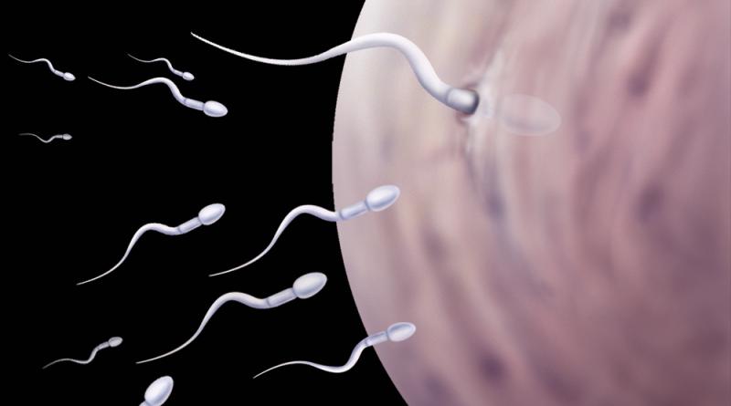 Можно ли забеременить в сексе при месячных