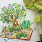 Раскраски-антистресс Джоанны Басфорд