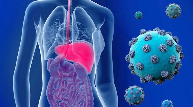 Гепатит С как передается и что это такое